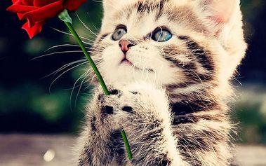 3D obraz s koťátkem a růží