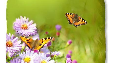Zelené povlečení Muller Textiel Butterfly, 140x200cm
