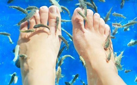 Relaxační lázeň nohou s rybičkami Garra Rufa