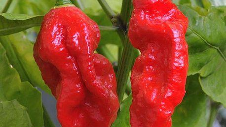 Semínka chilli papričky - 3. nejpálivější paprička na světě