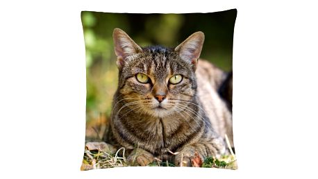 Polštář s motivem kočky 33, hnědá, Mybesthome 40x40 cm Varianta: Povlak na polštář, 40x40 cm
