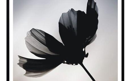 Plakát Nord & Co Flower, 21 x 29 cm