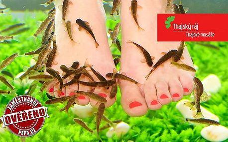 1–3x 15minutová lázeň s rybičkami Garra Rufa v pražských salonech Thajský ráj