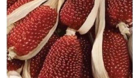 Kukuřice jahodová - 20 semen - dodání do 2 dnů