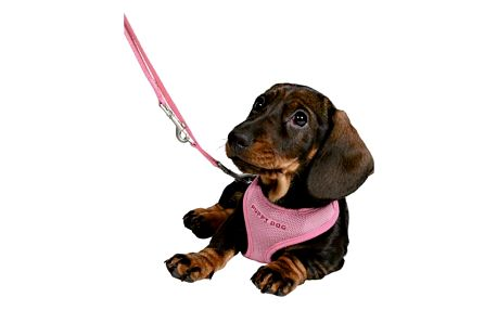 Postroj s vodítkem pro štěňata Trixie 26-34cm*10mm*2m růžová