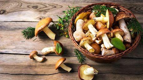 10, 20 nebo 40 gramů sadby hub na vaši zahrádku