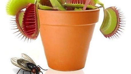Masožravá rostlina 20 ks semínek