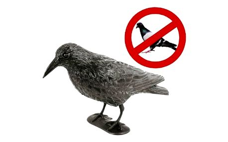 Havran odstrašující jiné ptáky