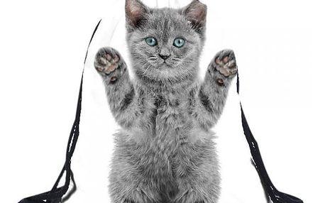 Vak na záda s šedou kočičkou