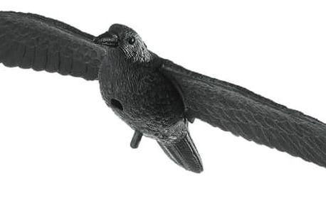 Létající havran odstrašující jiné ptáky