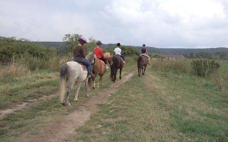 60min. jízda na koni + teorie péče a manipulace s koňmi nedaleko Prahy