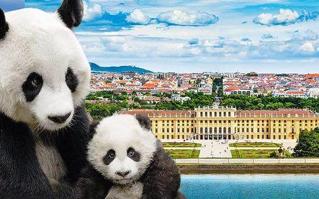 Celodenní zájezd pro 1 s návštěvou slavné ZOO a prohlídkou Vídně