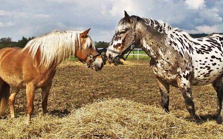 Péče o zvířátka, jízda na koni a oběd pro dva