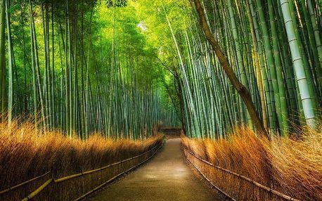1Wall fototapeta Bambusový les 315x232 cm