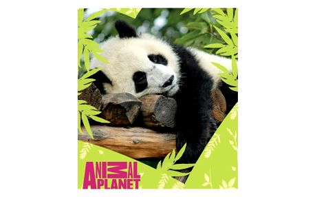 Carbotex deka Animal Planet Panda, 120 x 150 cm