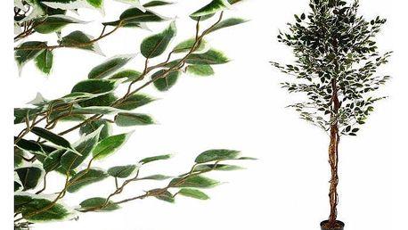 Umělá květina - fíkus - 185 cm