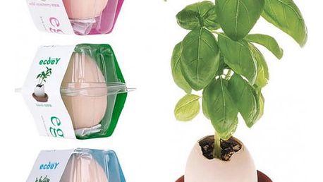 Hrnkové rostlinky Lucky Egg