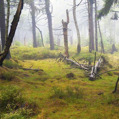 Klid v panenské přírodě chráněného území Rýchory