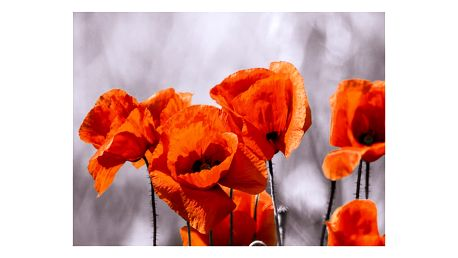Obraz Eurographics Poppies