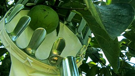 Pomůcka na česání ovoce ze stromů
