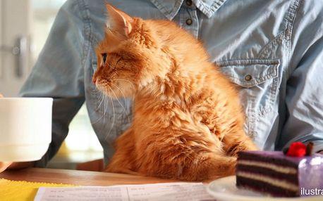 Domácí dortík a káva z nabídky v kočičí kavárně