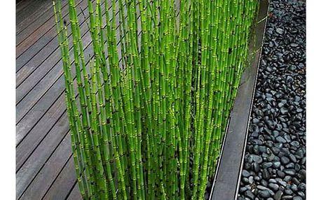 Zelený bambus - 60 ks semínek
