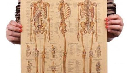 Retro plakát s kostrou