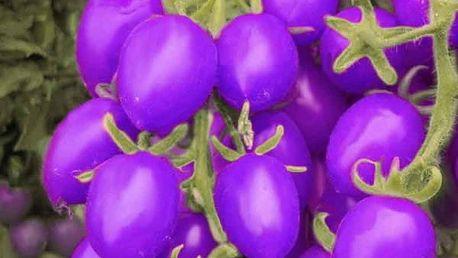 Semena fialových rajčat - 200 kusů