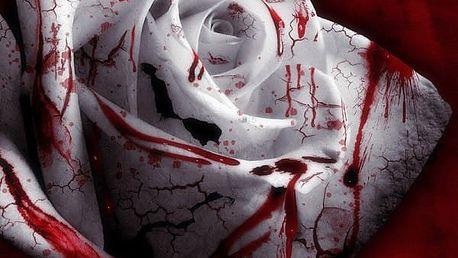 Semínka zakrvácených růží - 100 kusů