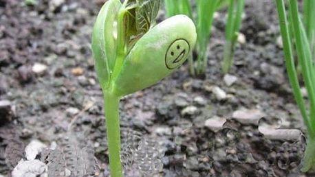 2 kouzelné fazole s nápisem