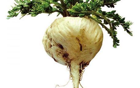 50 semen léčivé byliny - Maka