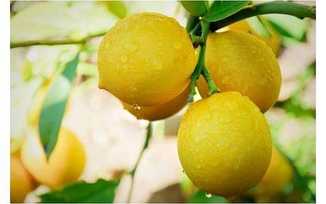20 semen tropického a citrusového ovoce - 5 druhů