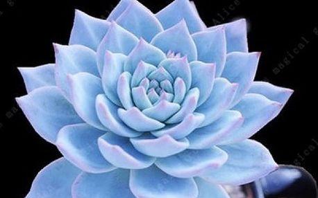 Semínka různých odrůd kaktusů - 100 kusů
