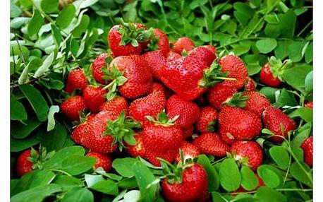 Celoroční semínka jahod