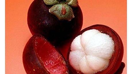 Semínka tropického ovoce - 10 ks