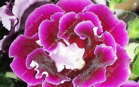 Semena krásné gloxínie - 18 variant