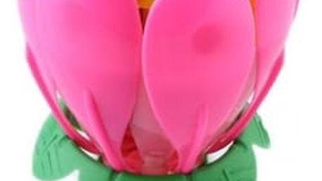 Hrající svíčková květina