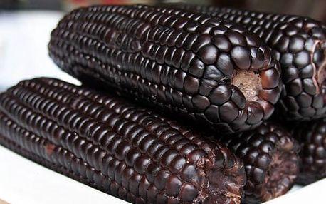 Semena sladké černé kukuřice - 20 ks