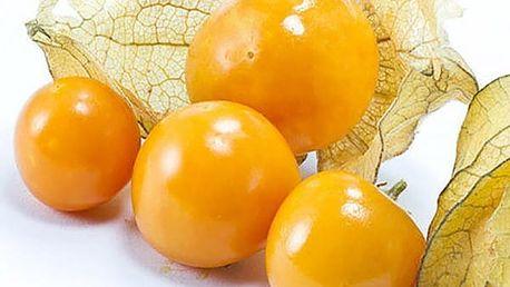 Semínka mochyně peruánské - 100 kusů
