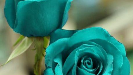 Semena unikátní modré růže - 200 ks