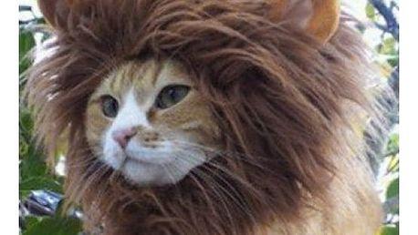 Lví hříva pro pejsky a kočky