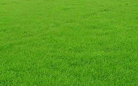 1 000 semen trávy
