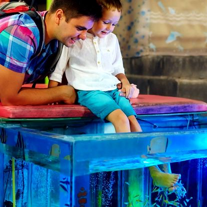 Garra Rufa: koupel s rybičkami i pro děti