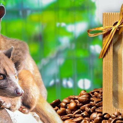 Vzácná cibetková káva: Kopi Luwak 100% Arabica