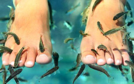 Ozdravná koupel nohou s rybičkami Garra Rufa