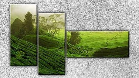 Zelená pláň