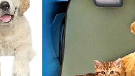 deka pro psy - PET zoom Loungee