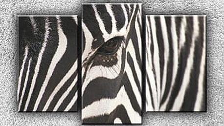 Zebra - oko