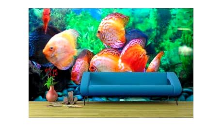 Fototapeta Rybky v akváriu