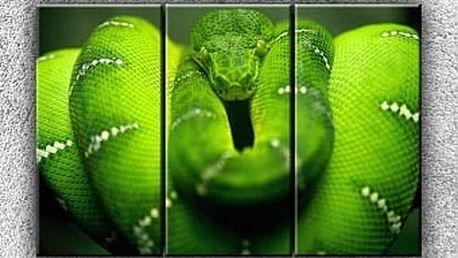 Zelený stočený had 2